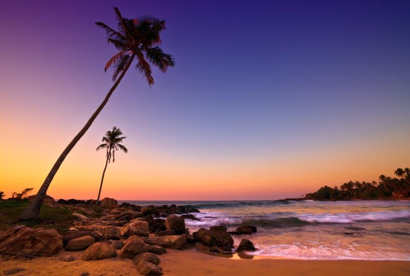 Naplemente a tengerparton pálmafákkal