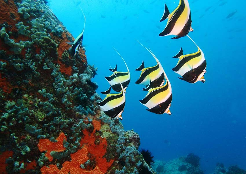 Seychelle-szigetek igazi búvárparadicsom